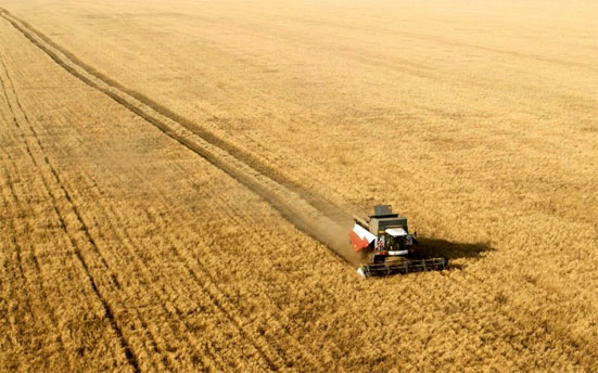 Прогноз урожая зерновых на 2020 год в России