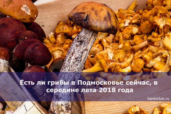 Есть ли грибы в Подмосковье сейчас, в середине лета 2020 года