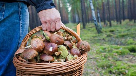 Налог на сбор ягод и грибов в России в 2020 году - существует ли такой в законе?