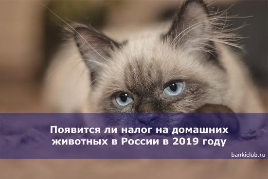 Появится ли налог на домашних животных в России в 2020 году