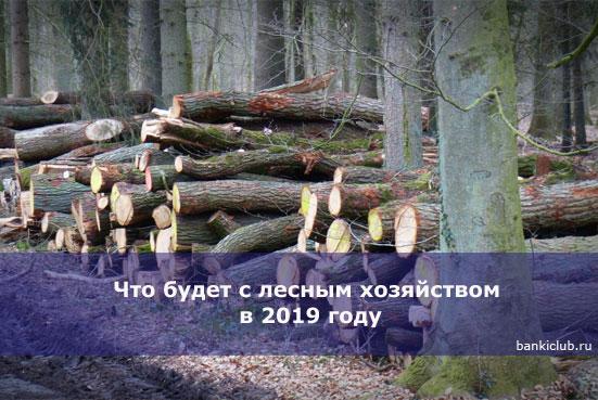 Что будет с лесным хозяйством в 2020 году