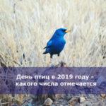 День птиц в 2019 году — какого числа отмечается