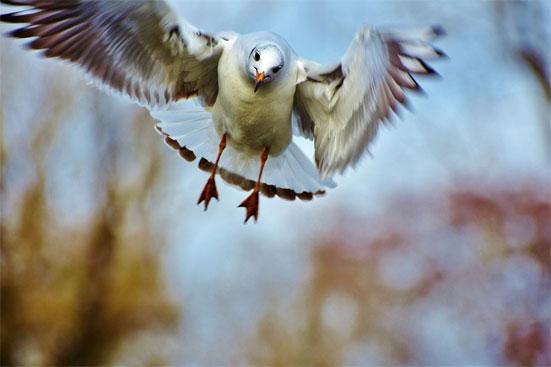День птиц в 2019 году - какого числа отмечается
