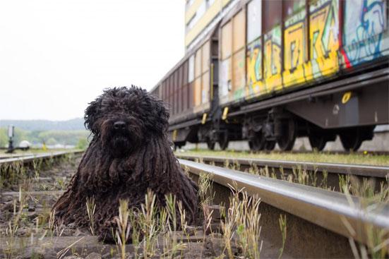 Правила перевозки собак в поезде РЖД в 2019 году