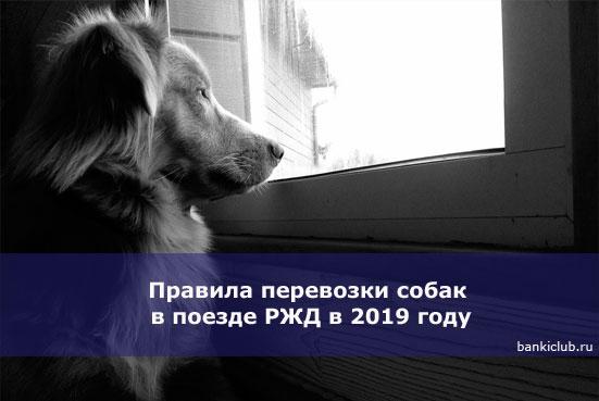 Правила перевозки собак в поезде РЖД в 2020 году