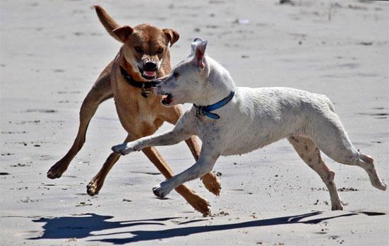 Список запрещенных к выгулу без поводка собак
