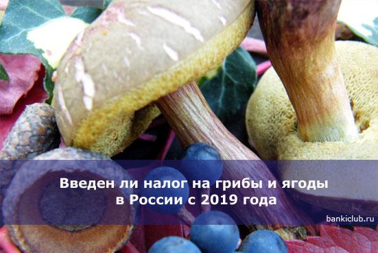 Введен ли налог на грибы и ягоды в России с 2019 года