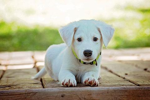 Каким будет грядущий год для Собак?