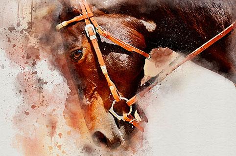 Что нового ждет Лошадей в грядущем году?