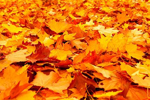 Осенние выходные