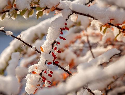 Климатическая норма в Питере в декабре